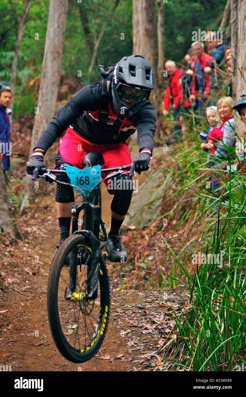 Competitor in Round 2 of the Enduro World Series mountain bike race on a Blue Derby track. Tasmania, Australia - Stock Image