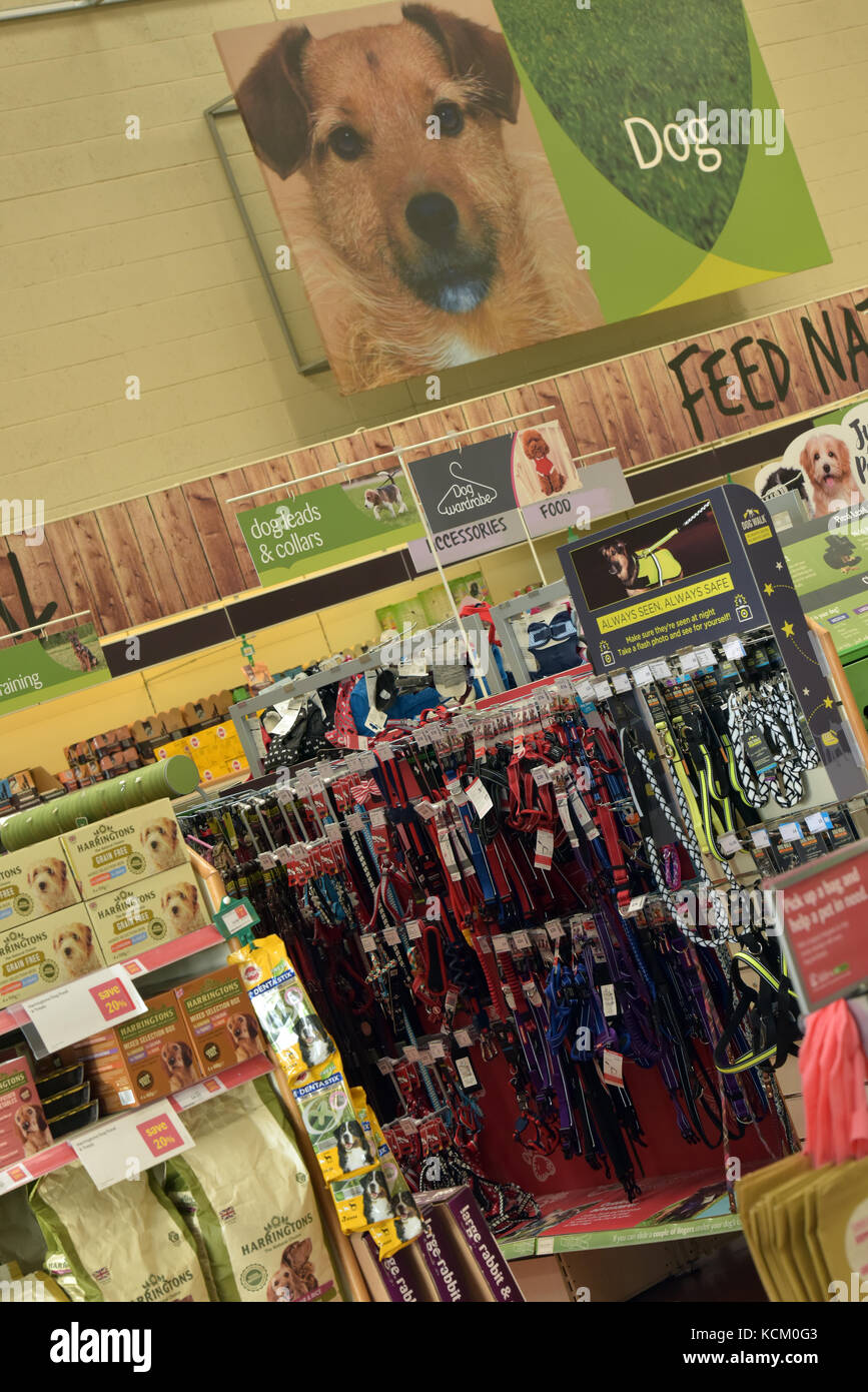 a selection of dog collars and leads on sale at a major high street branded pet supplies store. - Stock Image