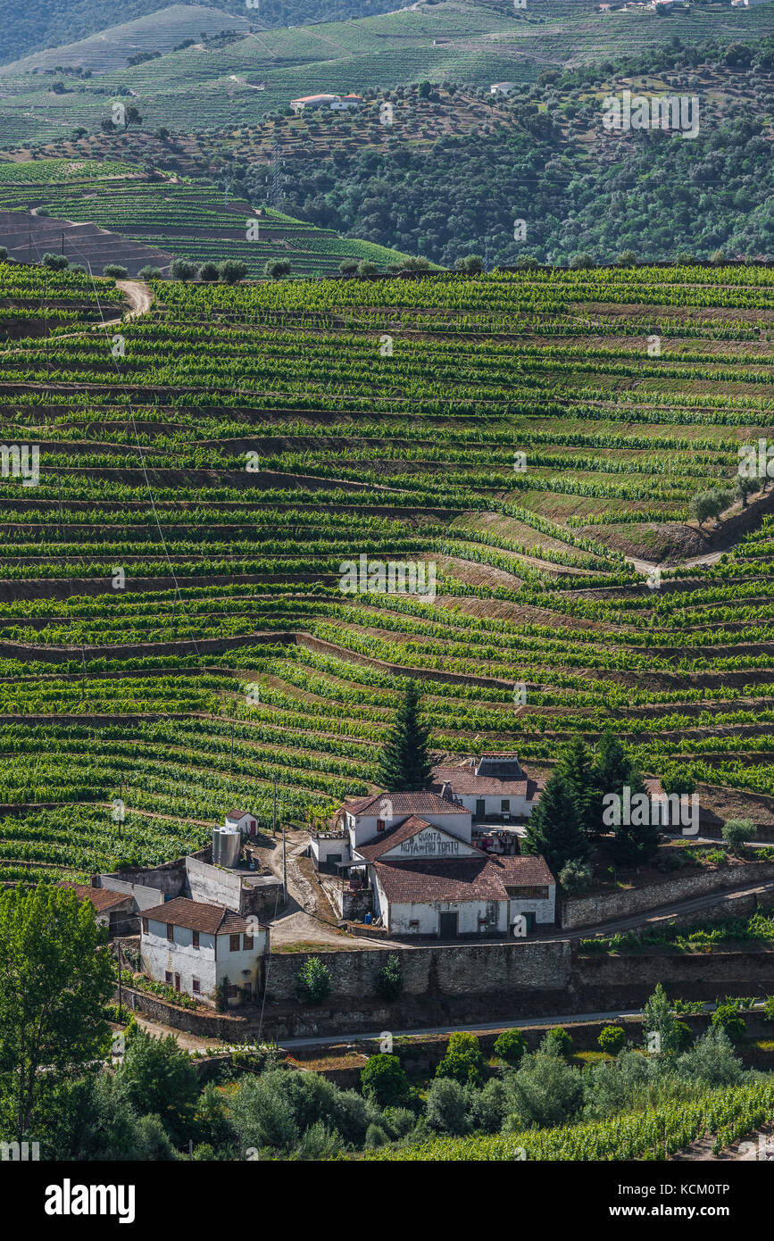 view of vineyards from Quinta Dona Maria, Douro Valley, Stock Photo