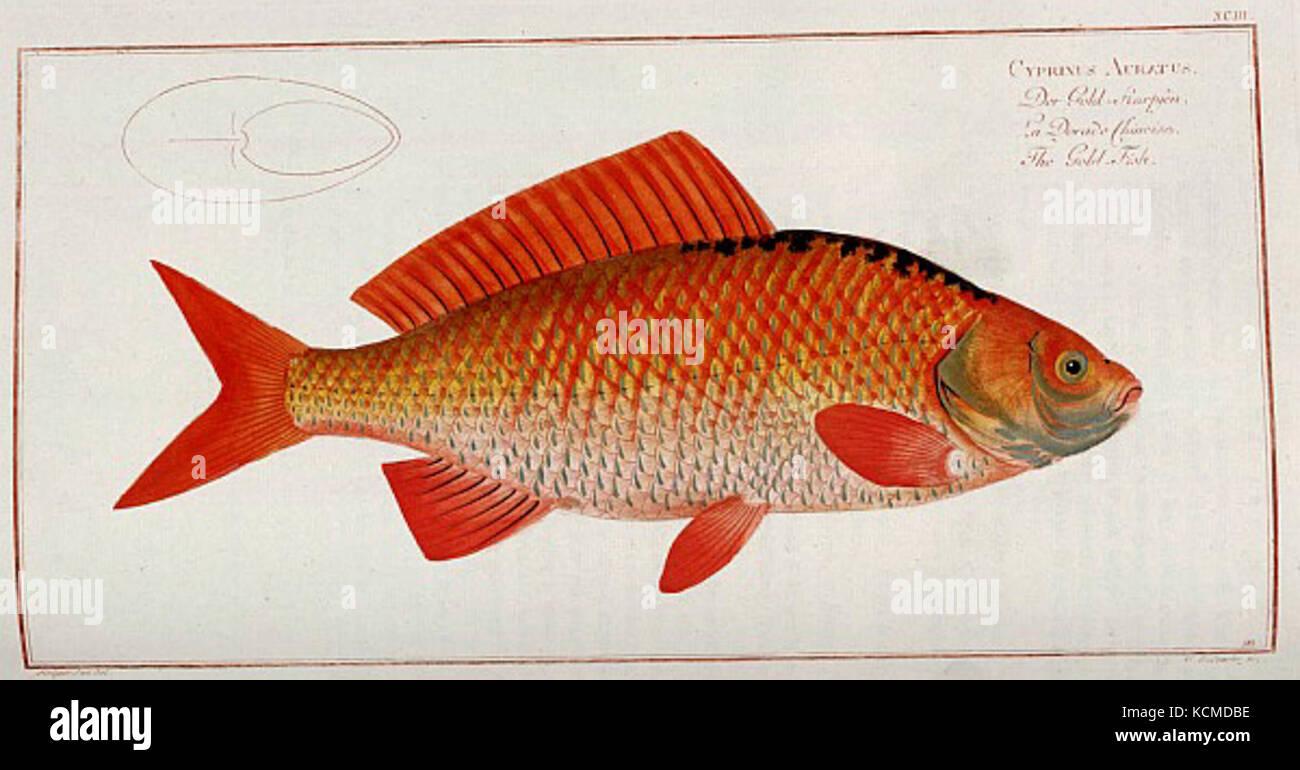 Fish Drawing Stock Photos & Fish Drawing Stock Images - Alamy