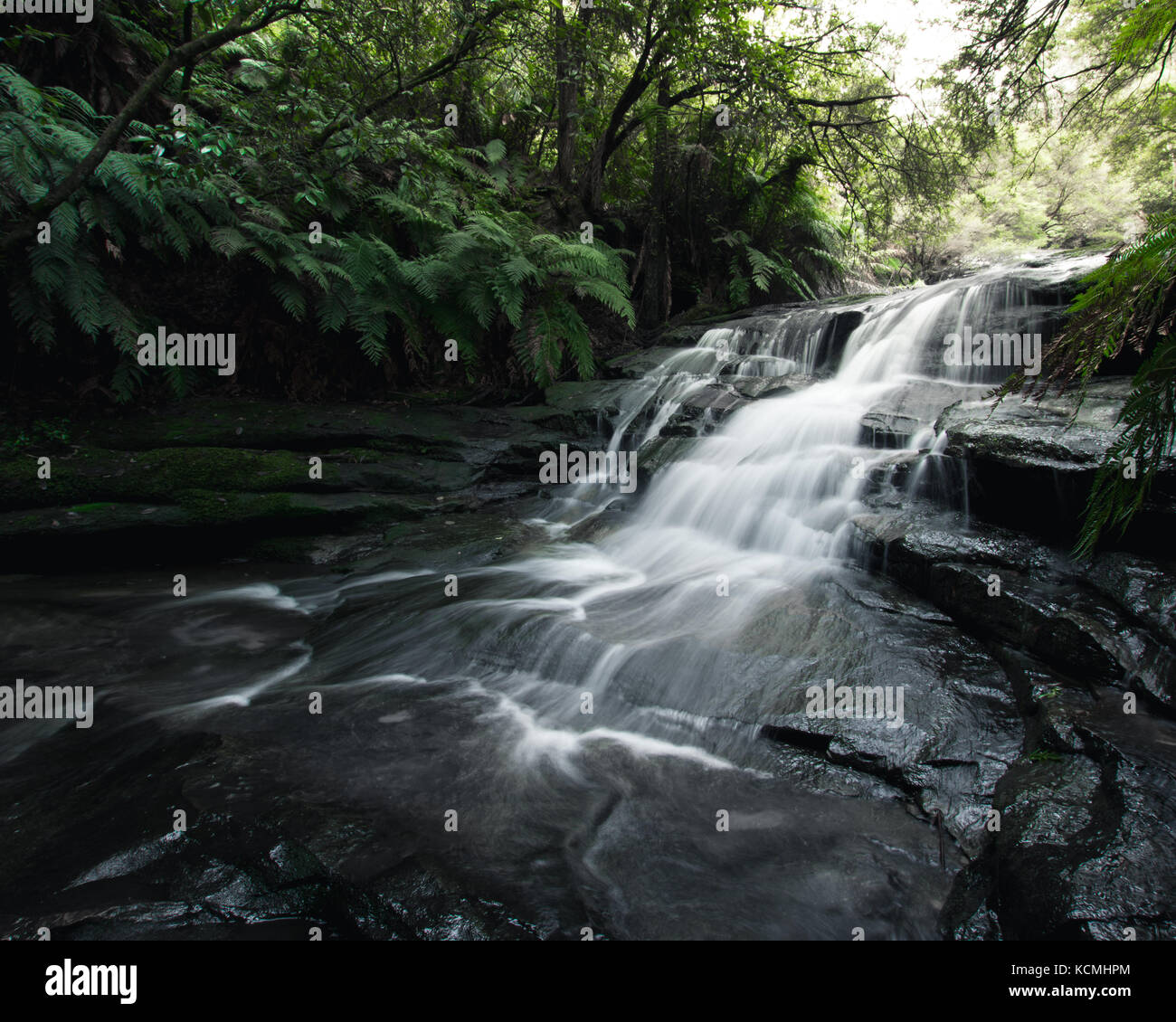 Smooth flowing water over rocks in the lush rainforest of Blue Mountains, Australia - Stock Image
