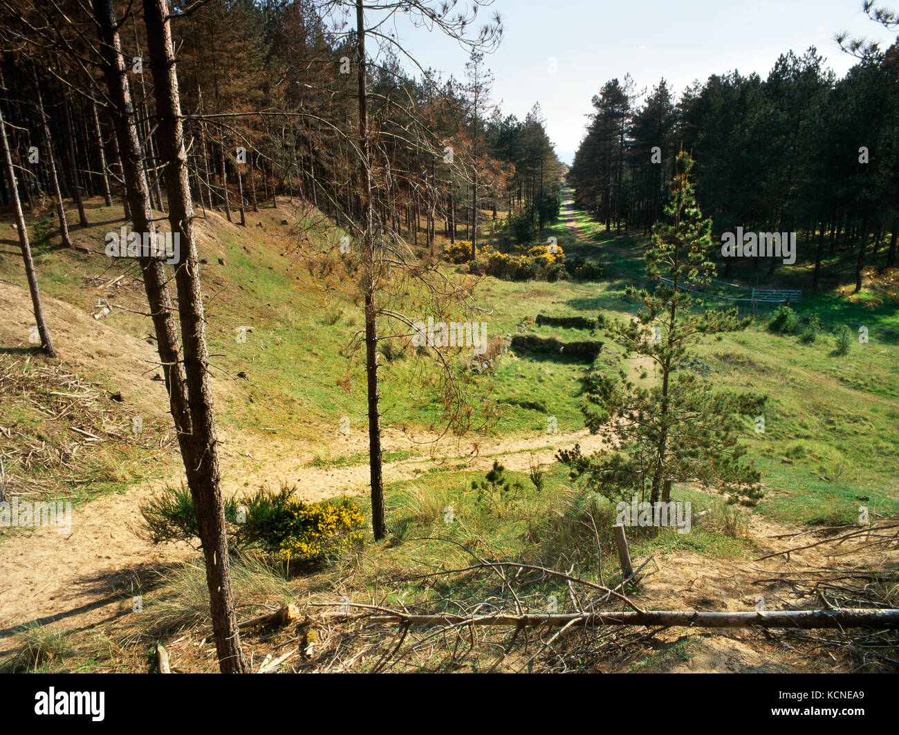 View SSW of remains of Hendai medieval farmstead, Newborough Forest, Anglesey, Wales, UK: a two-roomed dwelling - Stock Image