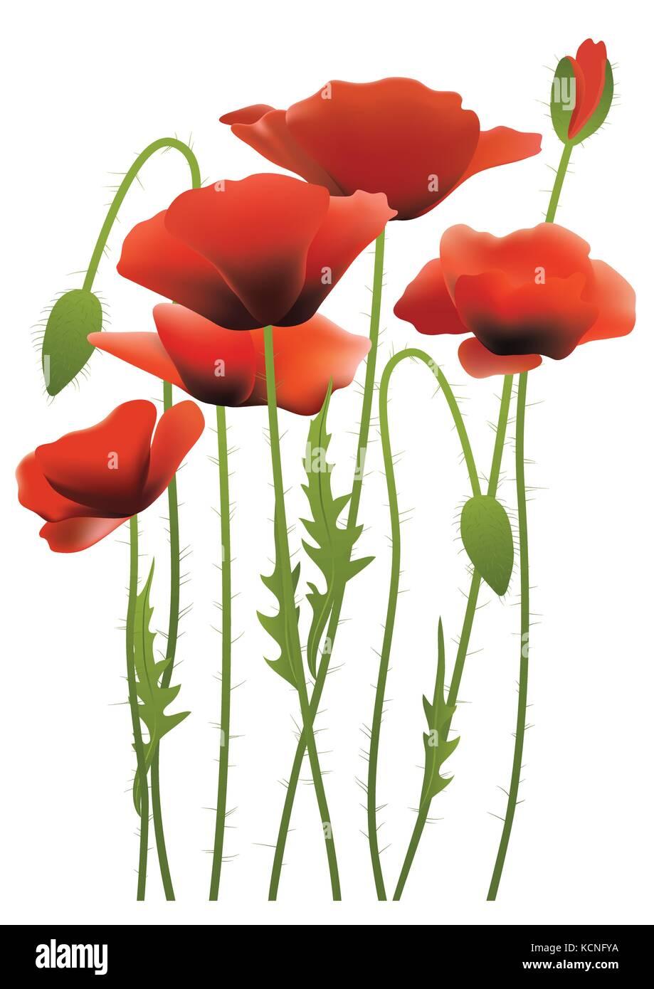Red poppy flowers vector illustration stock vector art red poppy flowers vector illustration mightylinksfo