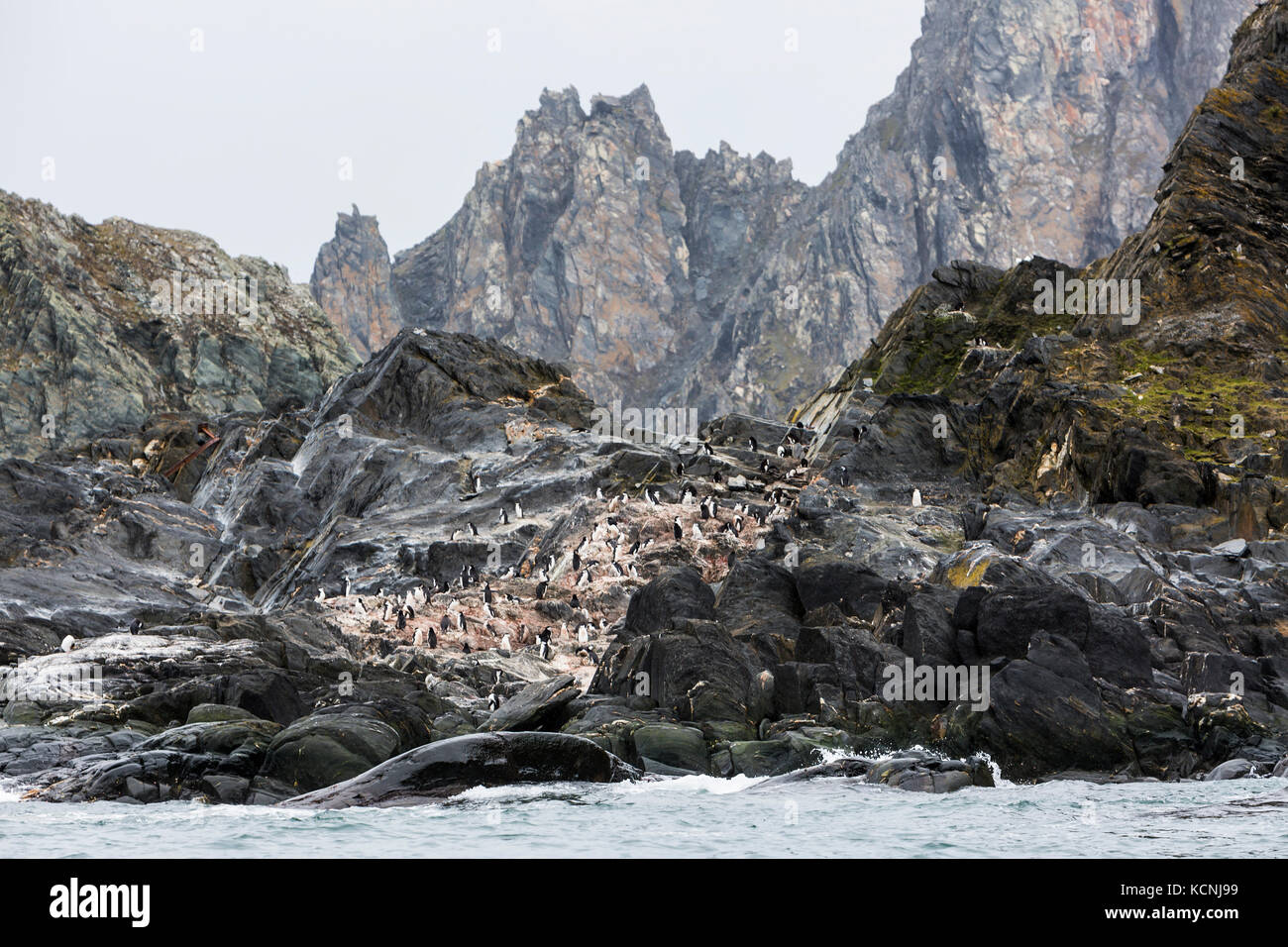 Chinstrap Penguins relax on a rocky headland on remote and inhospitable Elephant Island, South Shetland Islands - Stock Image