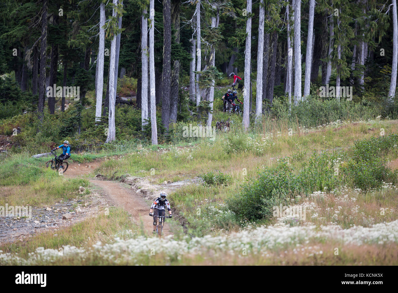 A group of mountain bikers emerges from the forest at the bottom of a trail at Mt. Washington, The Comox Valley, - Stock Image