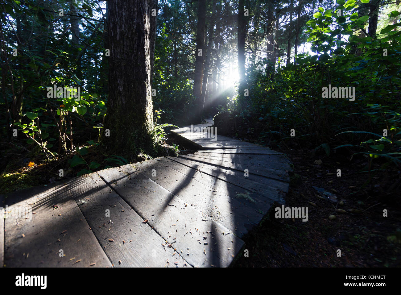 Low angled light highlights a boardwalk in the forest near Cox Bay near Tofino, Pacific Rim, Vancouver Island, British - Stock Image