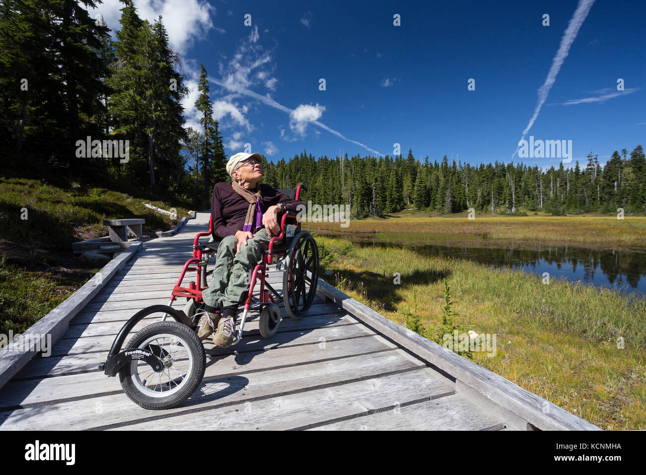 Boardwalks in Paradise Meadows provide for accessibility for handicapped folks wanting to also enjoy the great outdoors, Stock Photo