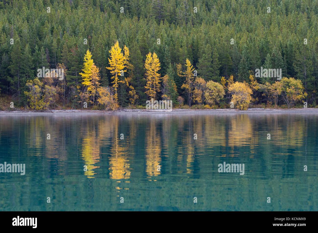 Fall colour, Chilcotin Region, British Columbia, Canada - Stock Image