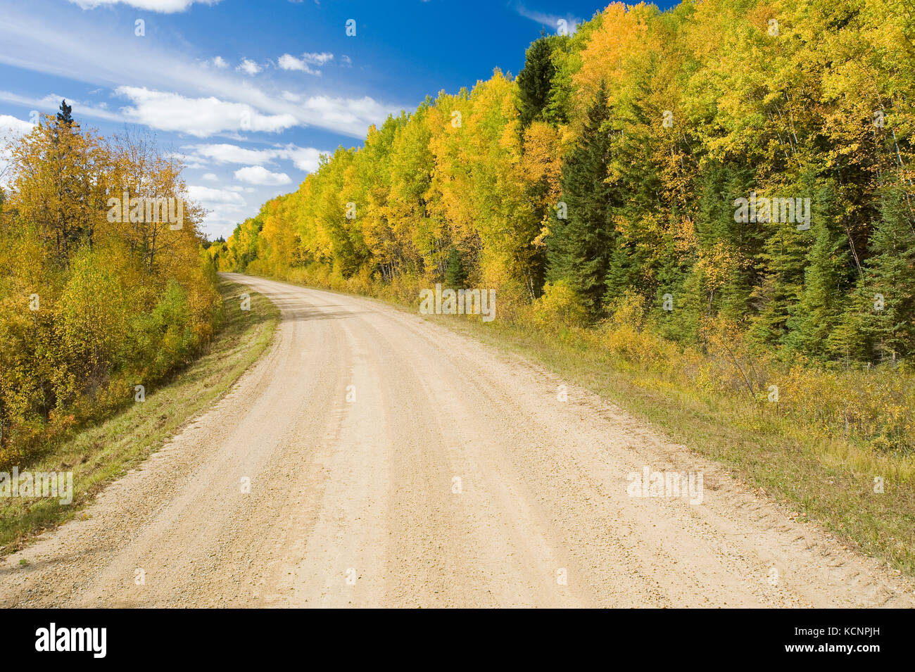 country road through boreal forest, Duck Mountain Provincial Park, Manitoba, Canada - Stock Image