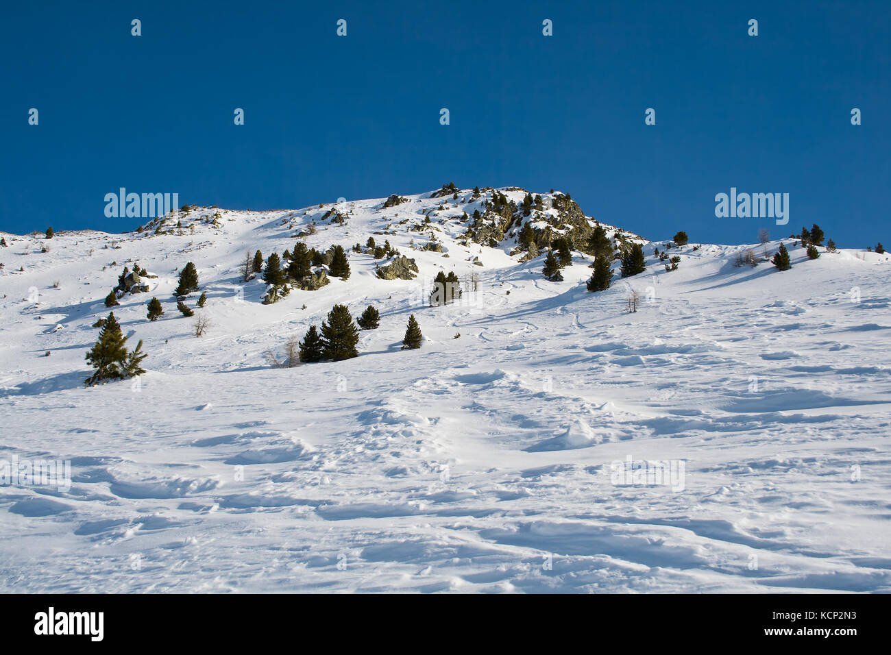 Spruces on a snowy slope of the mountain - Stock Image