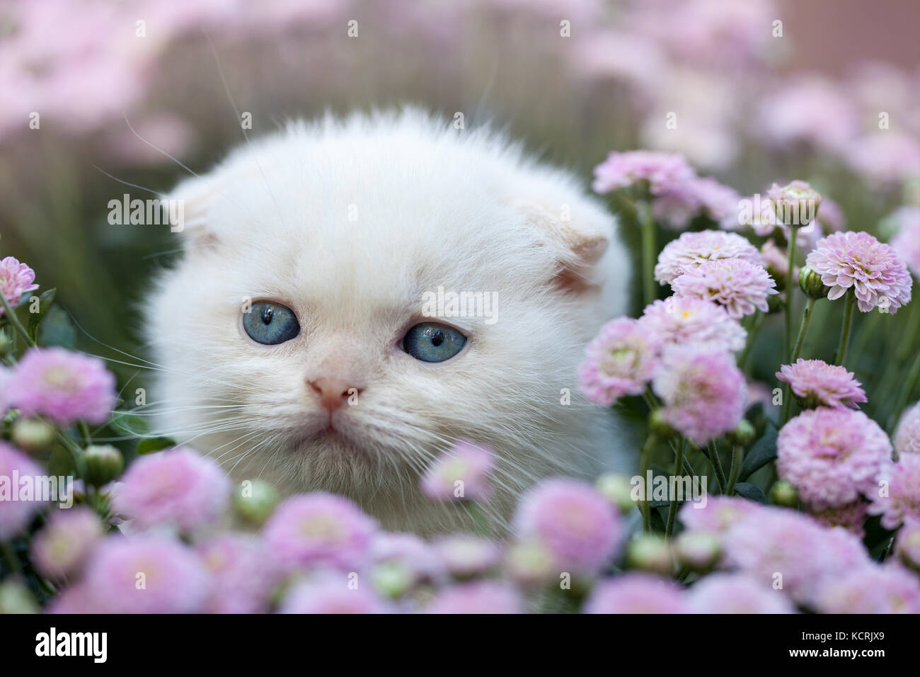 White Cat In The Garden With Yellow Flowers Stock Photos
