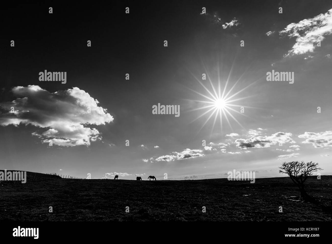 A very sharp sun star in the sky, with some horses on the left and a plant on the right, on top of a mountain - Stock Image