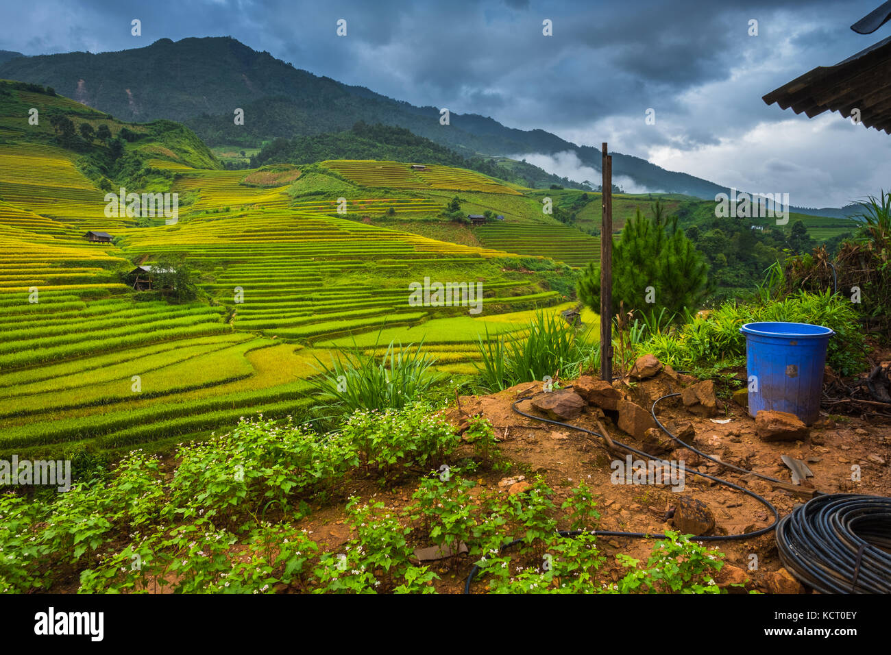 Beautiful landscape of rice terrace fields in Mu Cang Chai, Vietnam - Stock Image