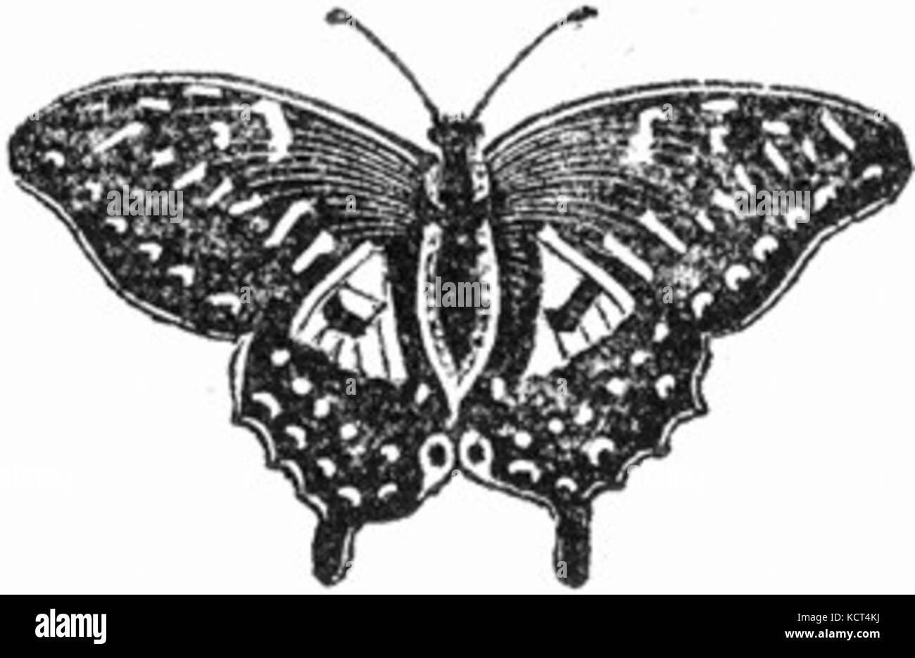 Butterfly black and white drawing stock photo 162799718 alamy