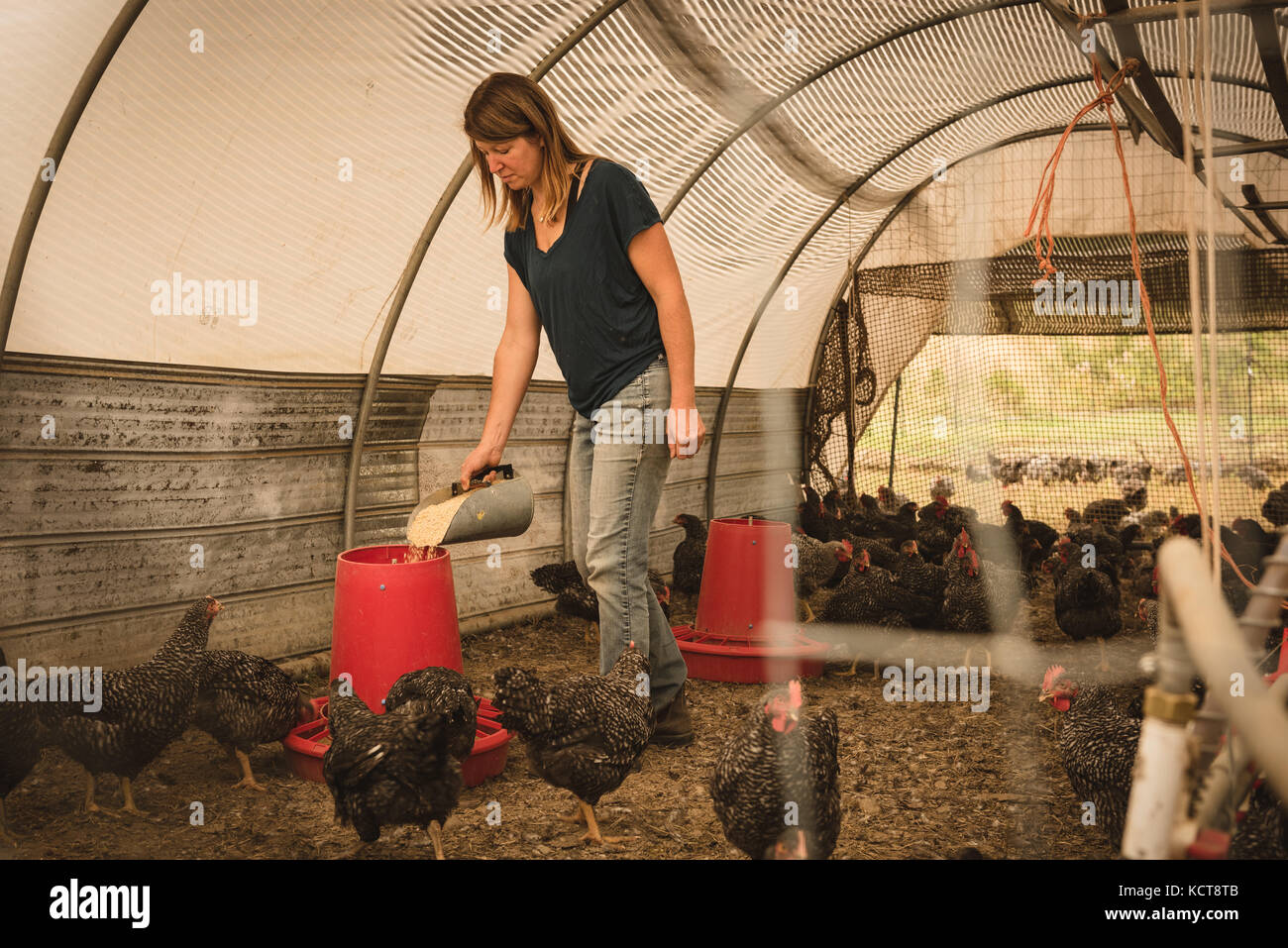 Female farmer feeding the hens in henhouse - Stock Image