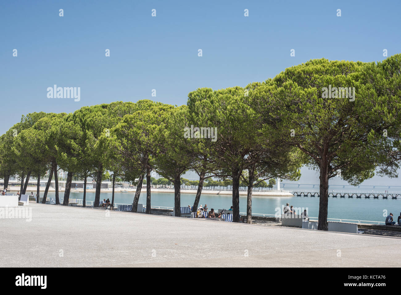 Trees near the edge of the River Tagus, Parque das Nacoes - Stock Image