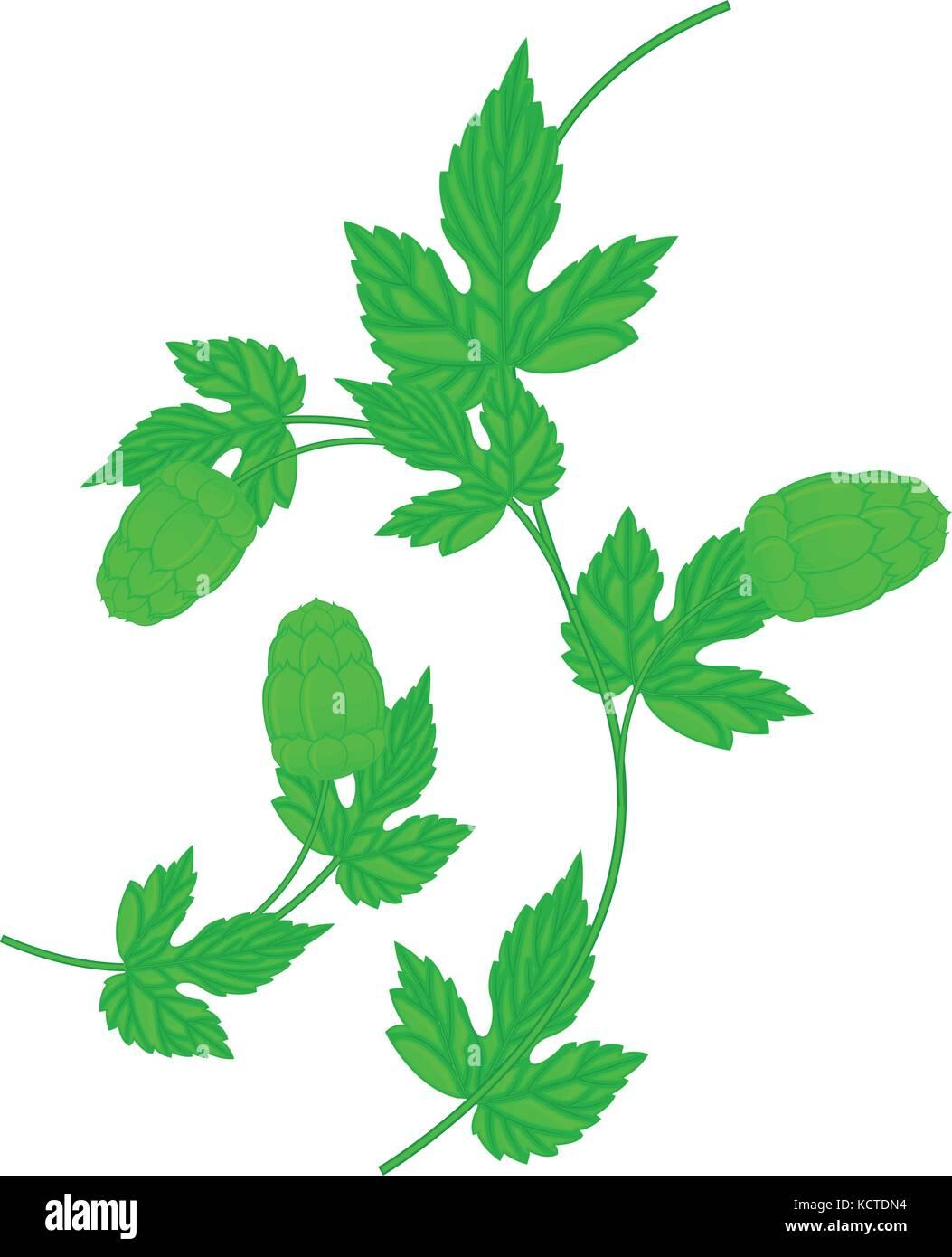 Hop cone and leaf - wavy twig - Stock Vector