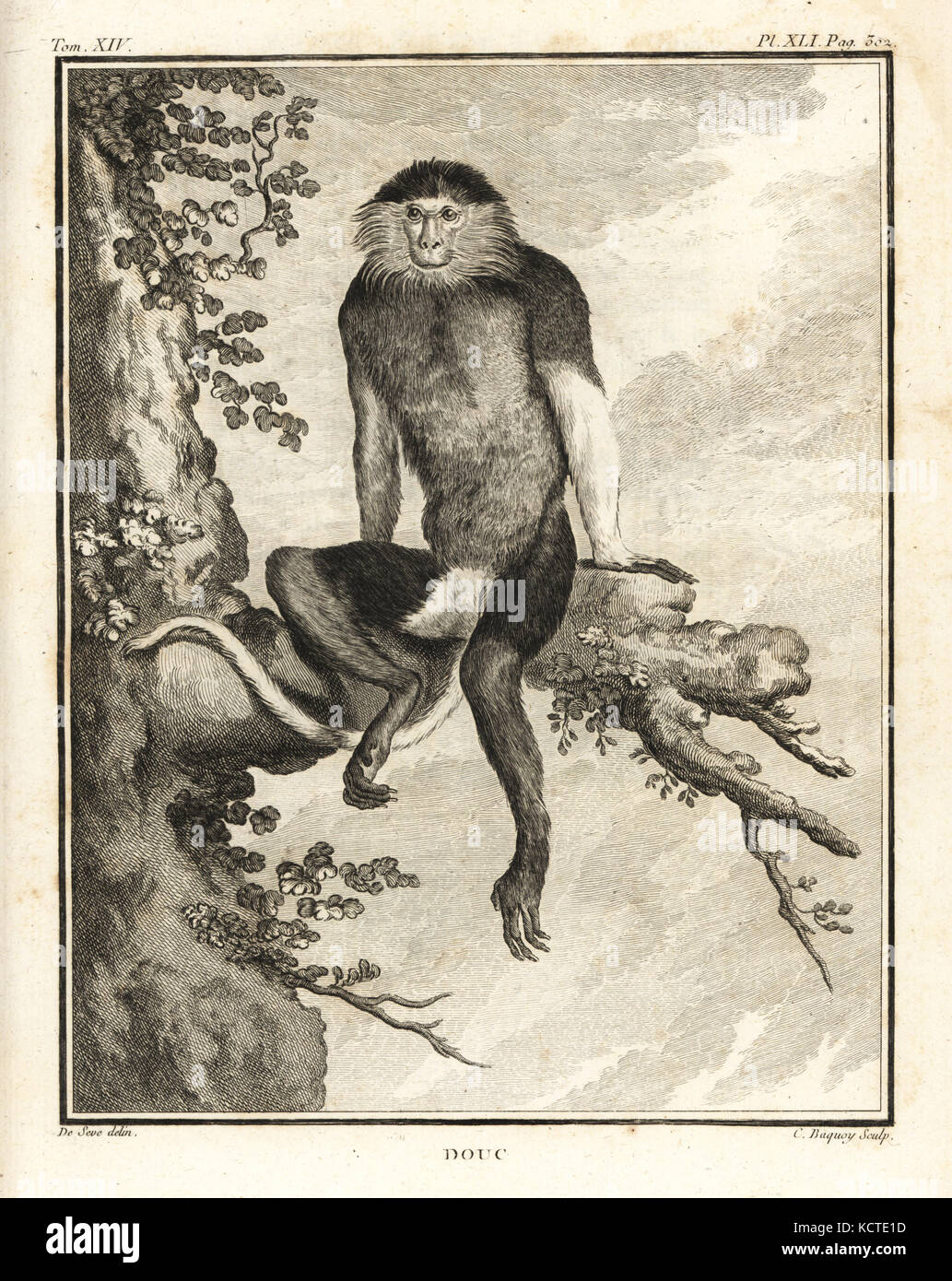 Red-shanked douc, Pygathrix nemaeus. Endangered. Copperplate engraving by C. Baquoy after an illustration by Jacques Stock Photo