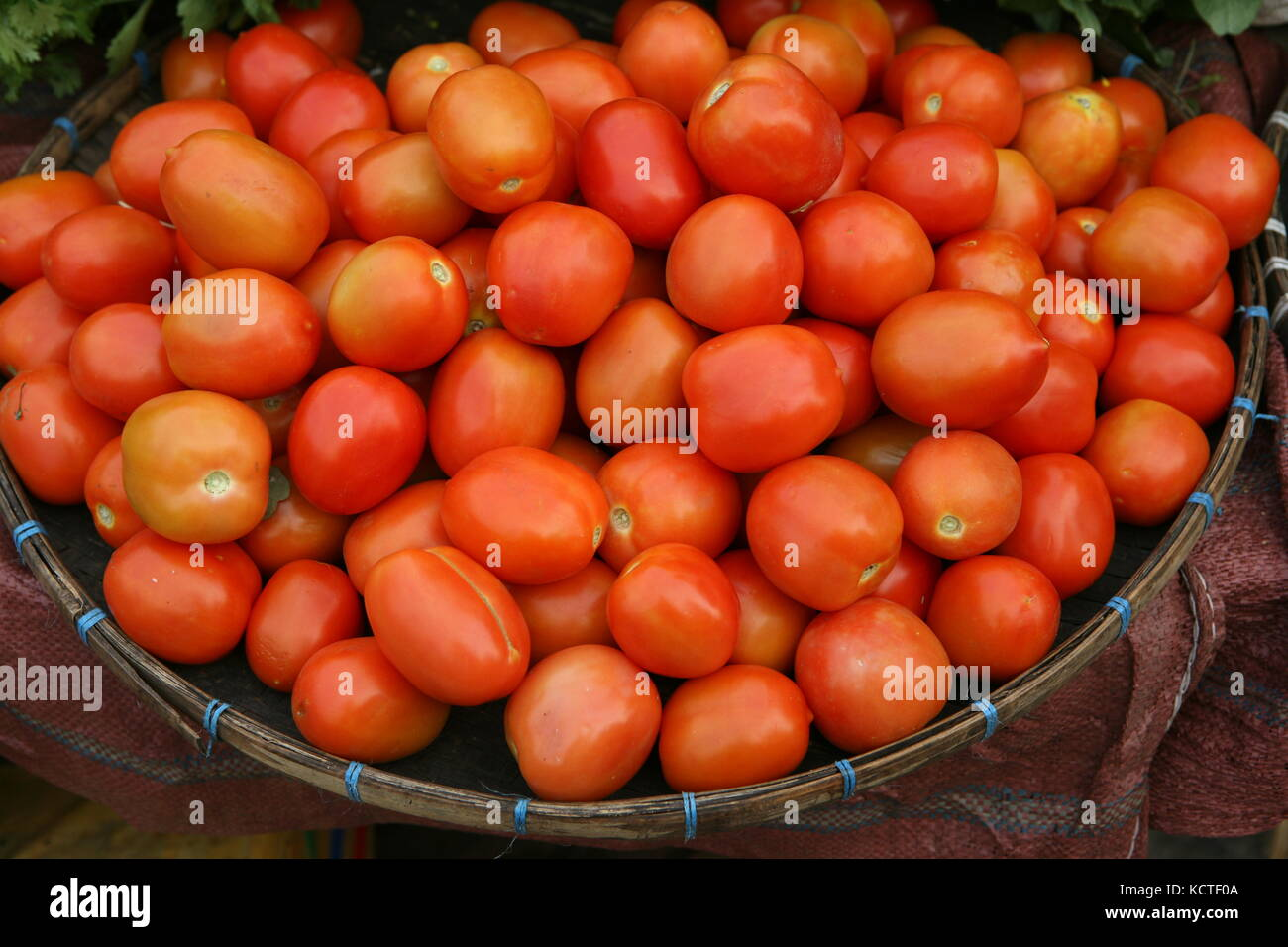 Tomaten in einem Korb - Tomatoes in a basket - Stock Image
