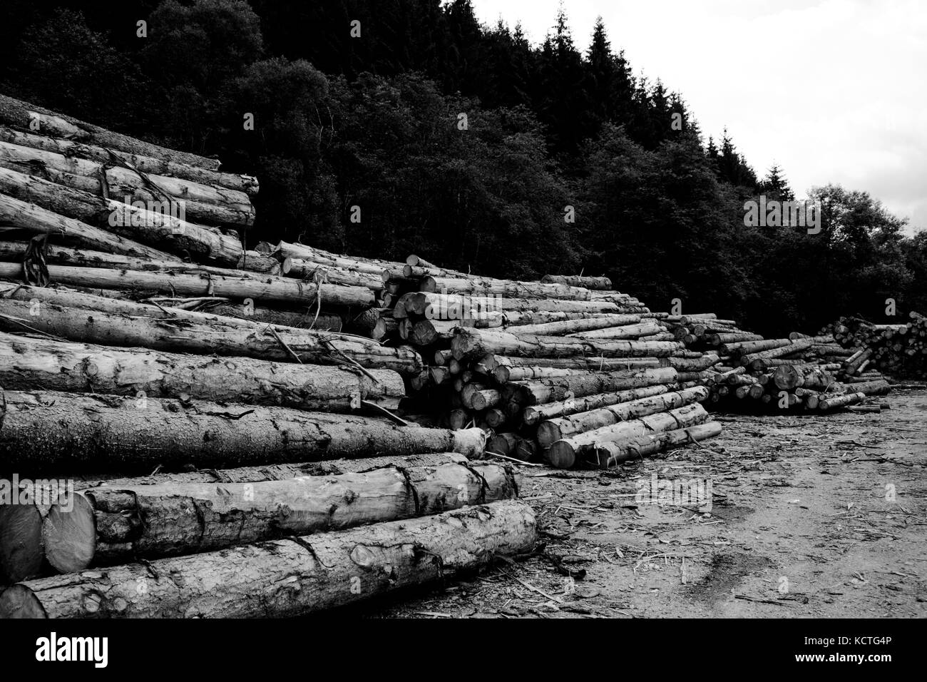 Stacks Of Logs In Forest Against Cloudy Sky - Stock Image