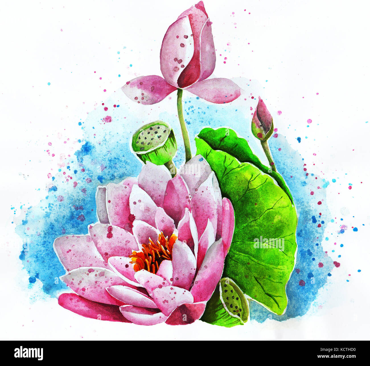 Lotus Flower Cut Out Stock Images Pictures Alamy