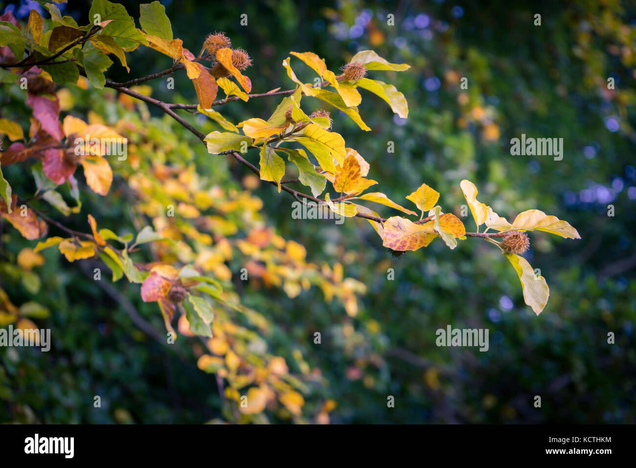 Tree Changing Color Leaves During Stock Photos & Tree Changing Color ...