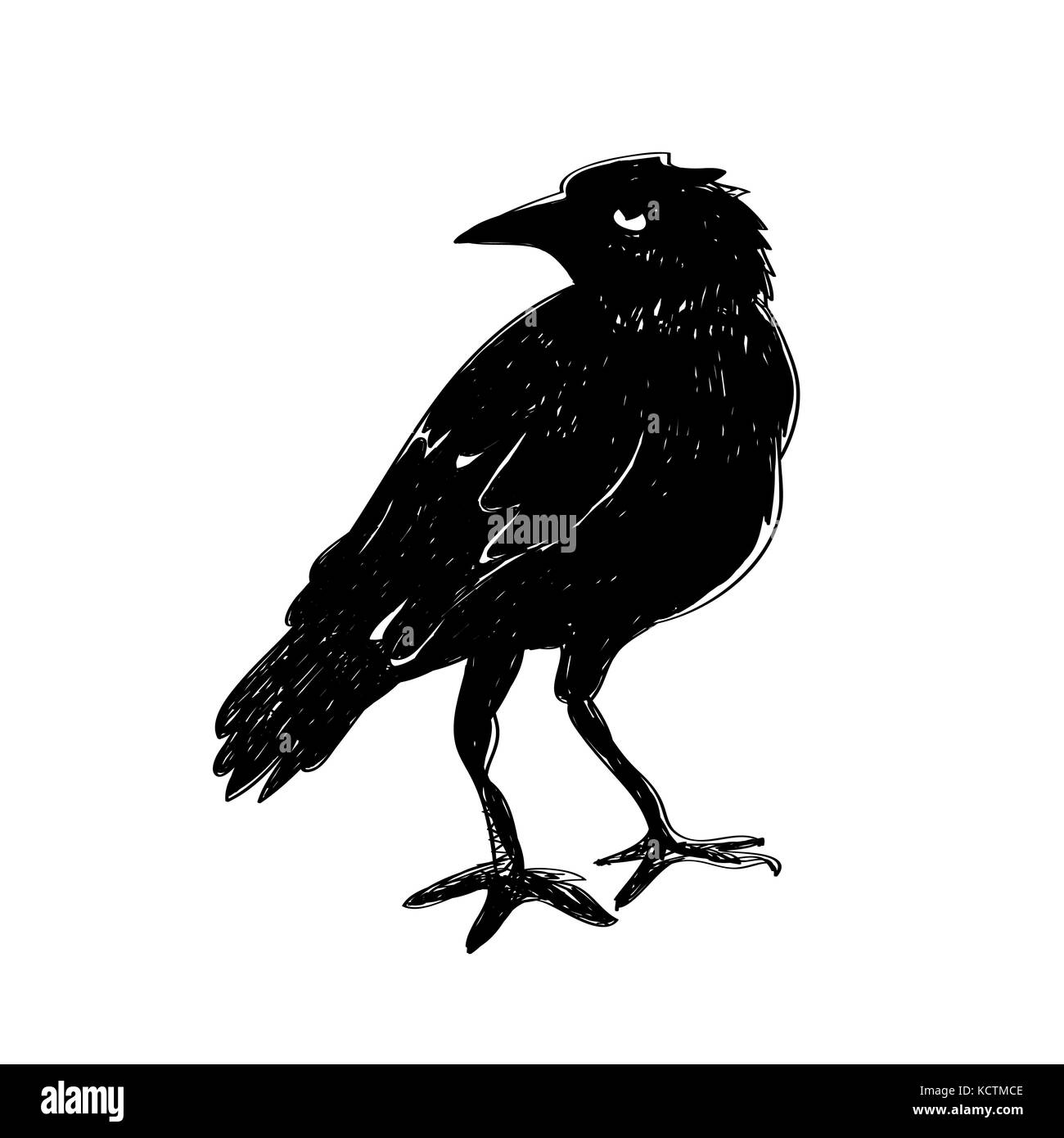 Black raven isolated on white background. Hand drawn crow. - Stock Image