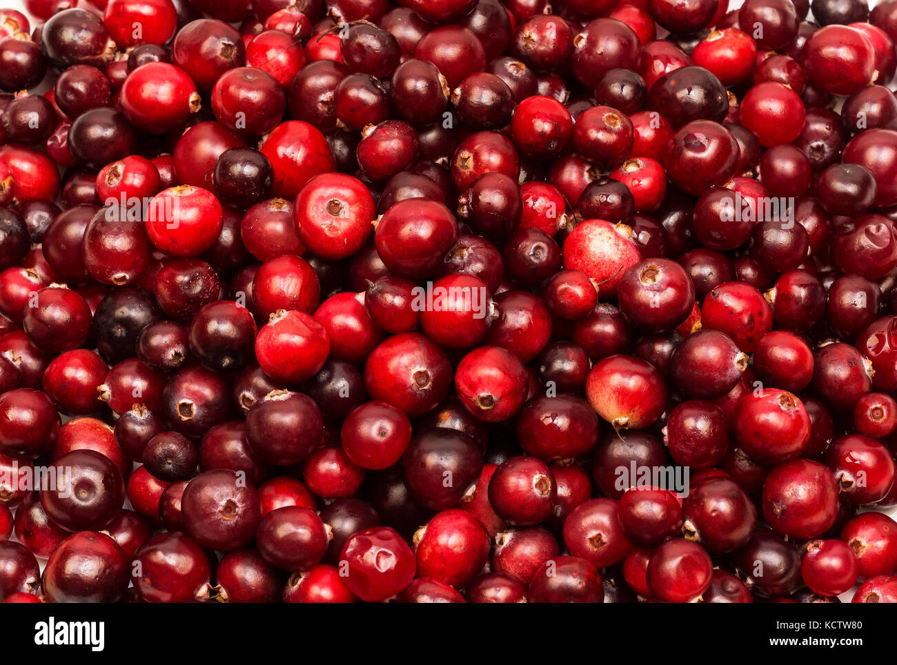 Red ripe cranberry berries in large quantities - Stock Image