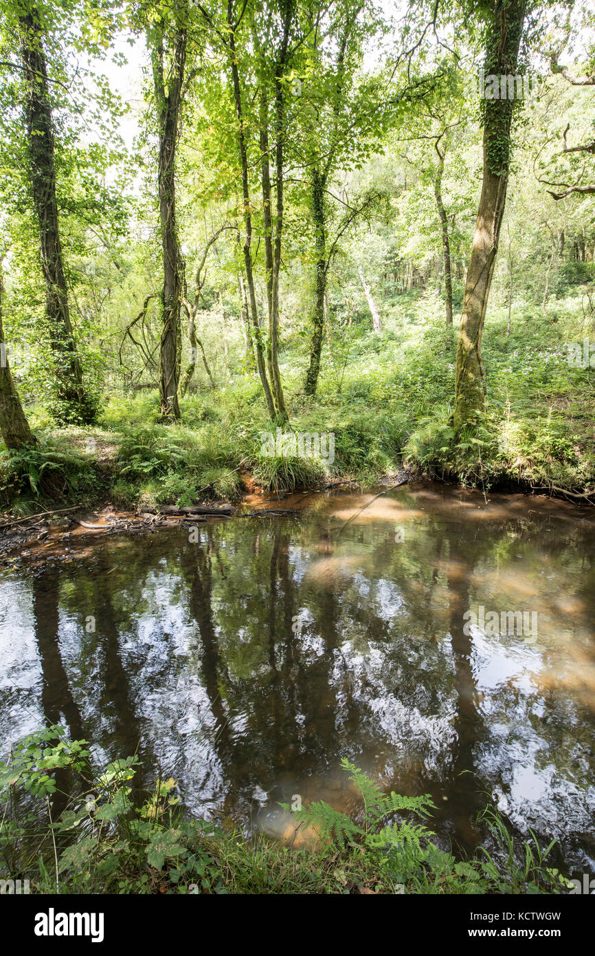 Trees reflected in the River Llan, Penllergare Valley Woods, Swansea, Wales, UK - Stock Image