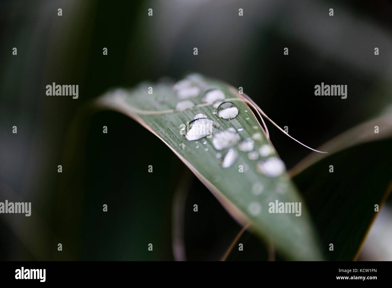 Blade Of Grass With Morning Dew During Sunrise - Stock Image
