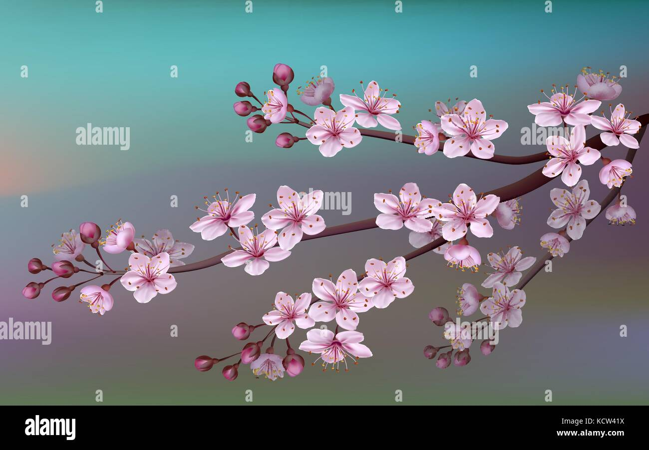 Realistic Sakura Japan Cherry Branch With Blooming Flowers Nature Stock Vector Image Art Alamy