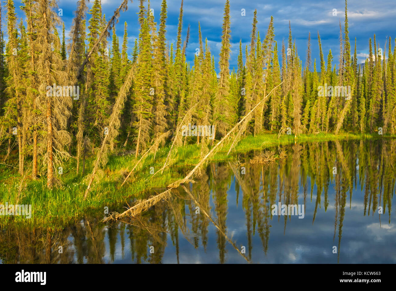 Wetland on the Dempster Highway (KM 210 - 215), Dempster HIghway, Yukon, Canada - Stock Image