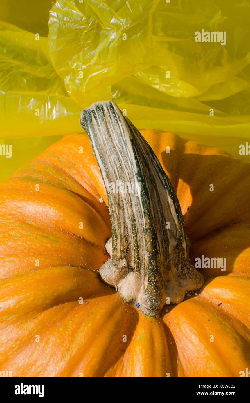 Stem Of Pumpkin Close Up And Plastic Texture Stock Photo Alamy