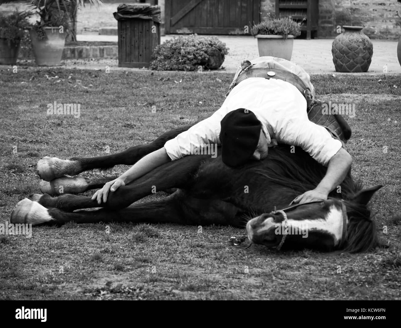 Indian horse taming (horse yoga) with gaucho at estancia nr. Buenos Aires, Argentina - Stock Image