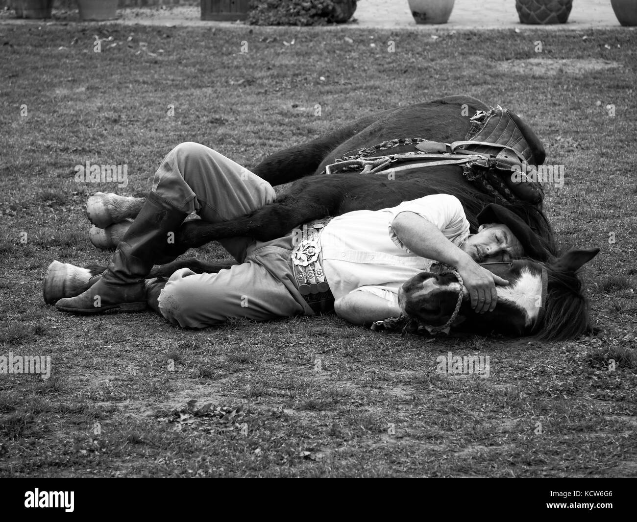 Man lying with horse, Indian horse taming (horse yoga) with gaucho at estancia nr. Buenos Aires, Argentina - Stock Image