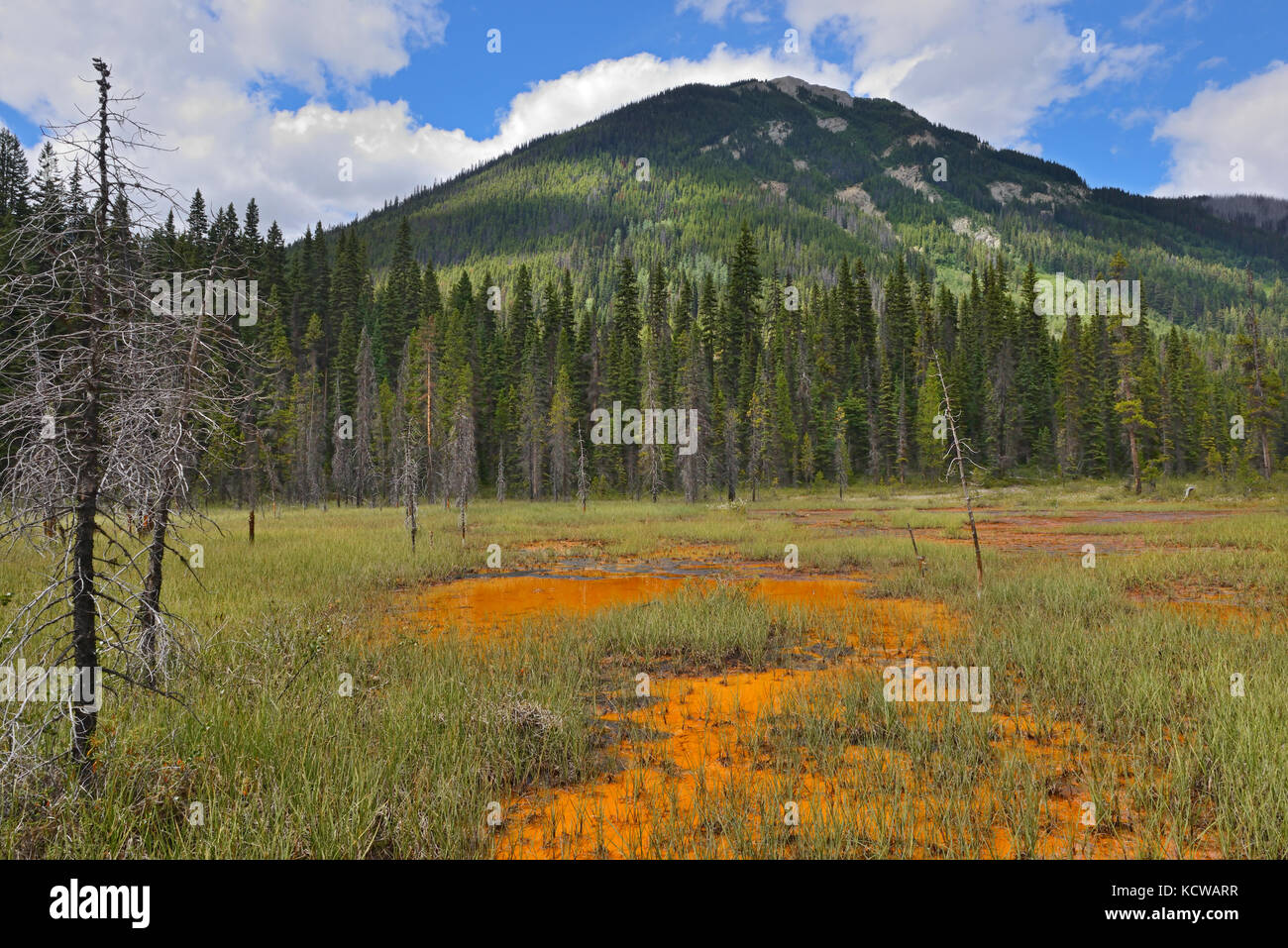 Paint Pots. Iron-rich cold mineral springs.  The Canadian Rocky Mountains, Kootenay National Park, British Columbia, - Stock Image