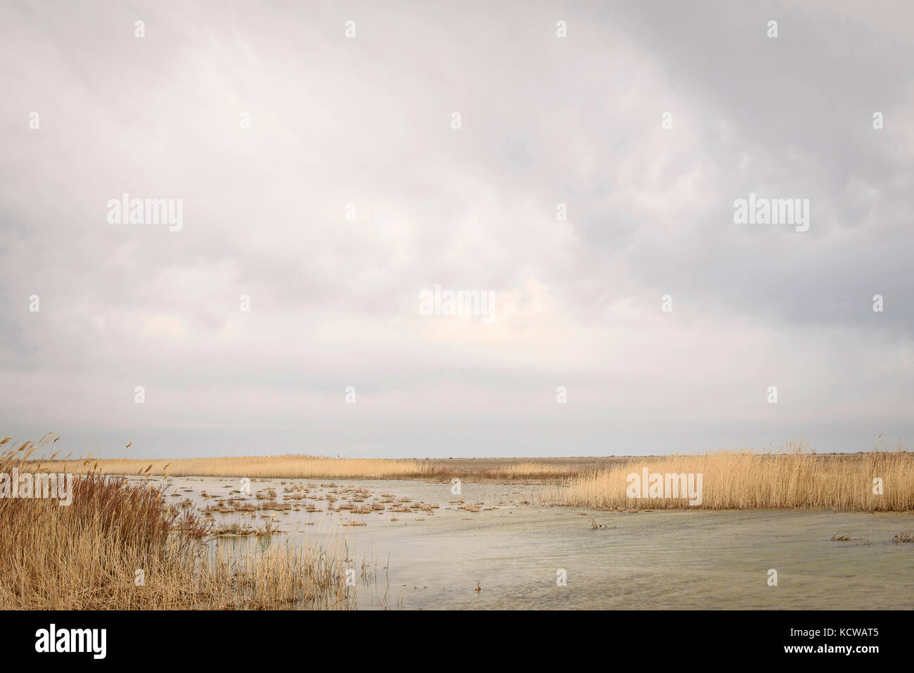 At 20 km from Aralsk, we can see ponds, we feel like at the sea border. The sea, which was once over 80km away in Stock Photo