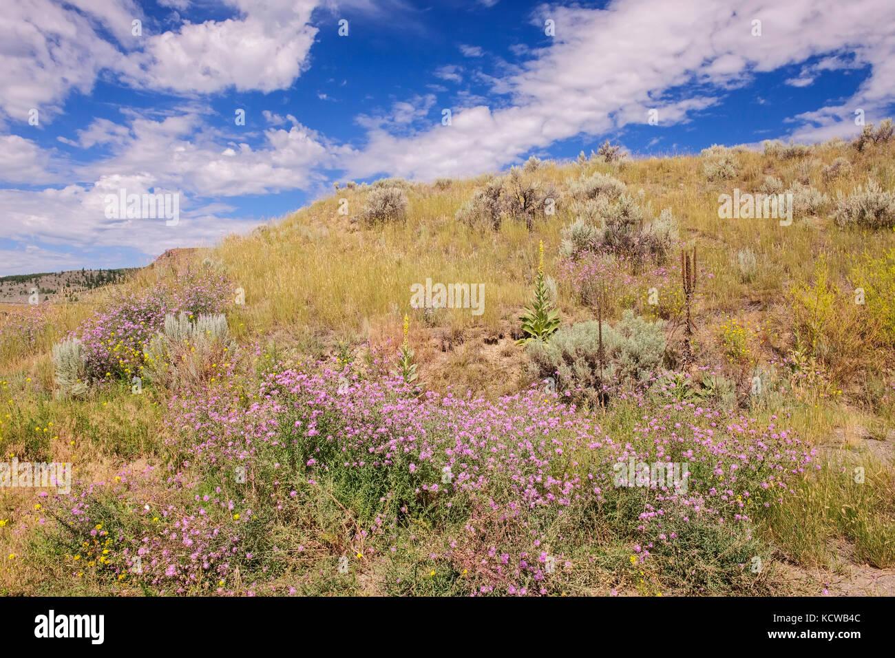 Grasslands ecosystem, Kamloops, British Columbia, Canada - Stock Image
