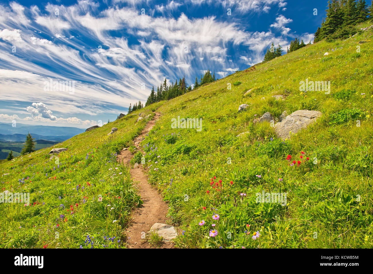 Wildflowers in the alpine zone at the summit of Sun Peaks (Lupines, paintbrush, composite), Near Kamloops, British - Stock Image