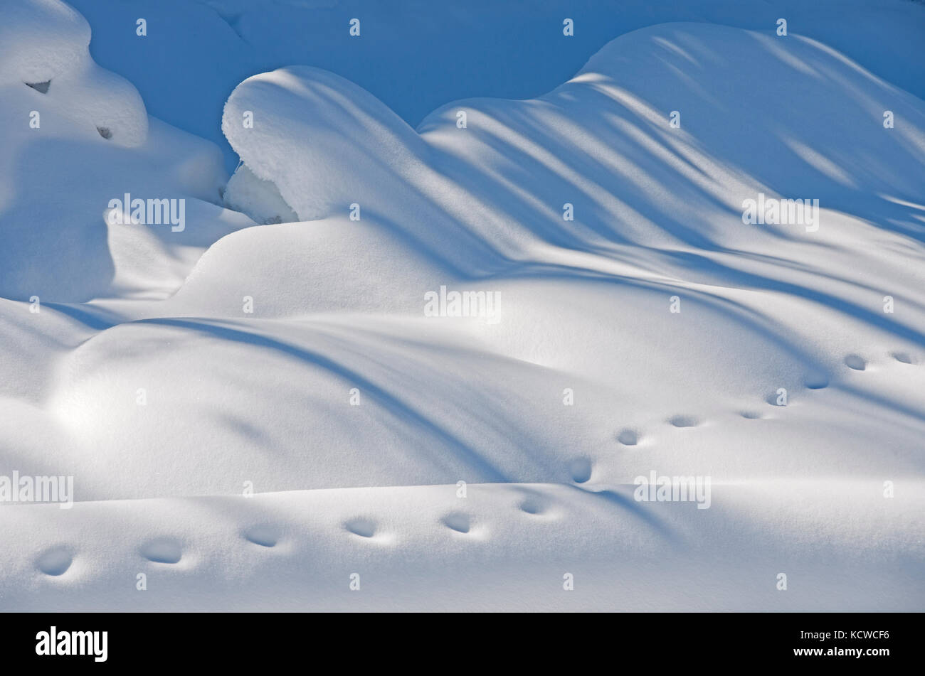 Animal tracks in the snow, Kootenay National Park, British Columbia, Canada - Stock Image