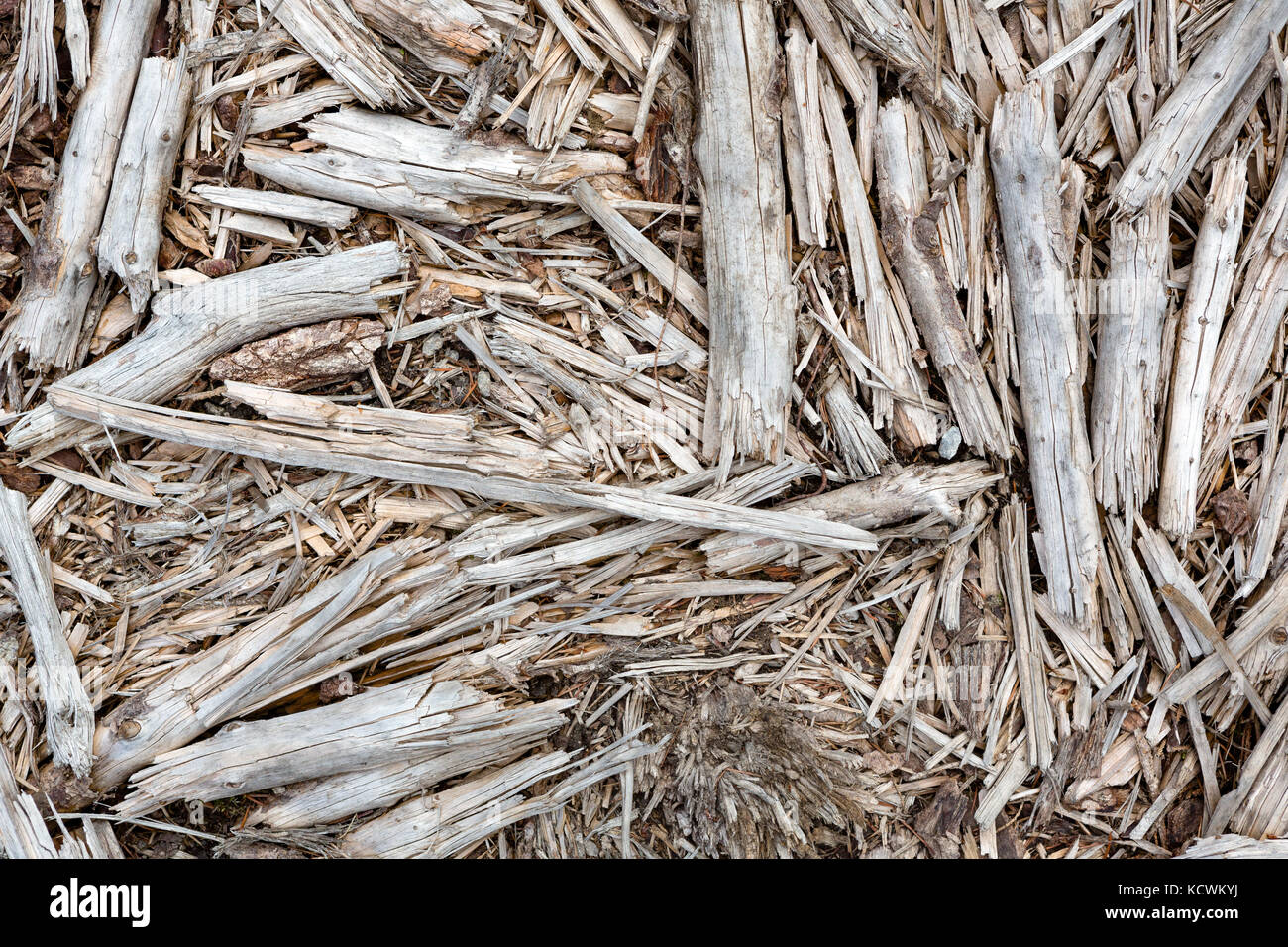 Abstract top view of old branches, sticks and twigs lying on the ground. Stock Photo