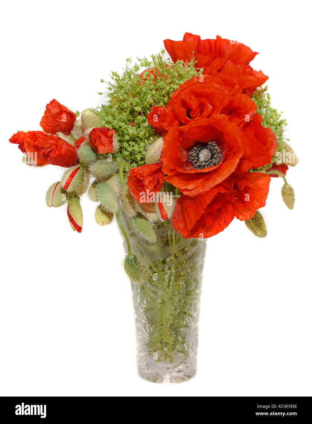 Red wild flowers of Papaver rhoeas bouquet in a transparent vase, corn field poppy with buds, close up. - Stock Image