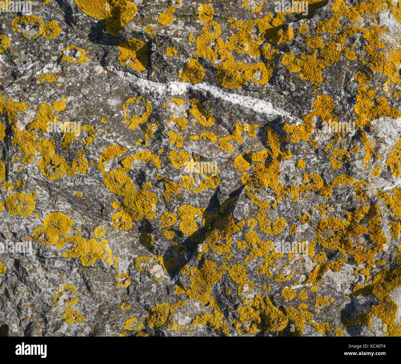 Sedimentary rock with quartz intrusion and yellow lichen growth, Cardiff Bay, Cardiff, UK - Stock Image