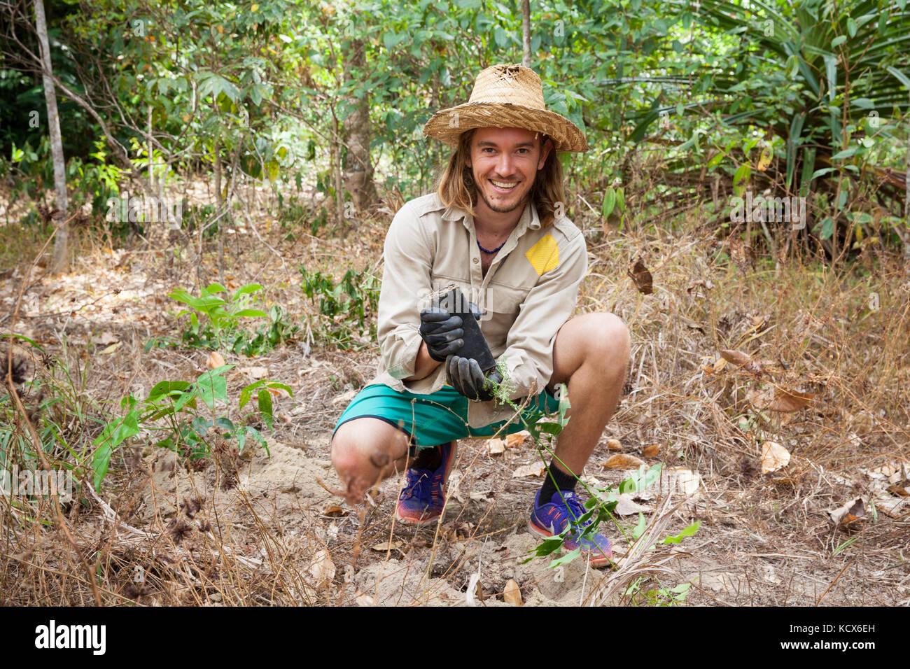 Rainforest revegetation. Rainforest Trust Australia & BeardsOn Tree Planting Day (2). Planting trees. 2017. - Stock Image