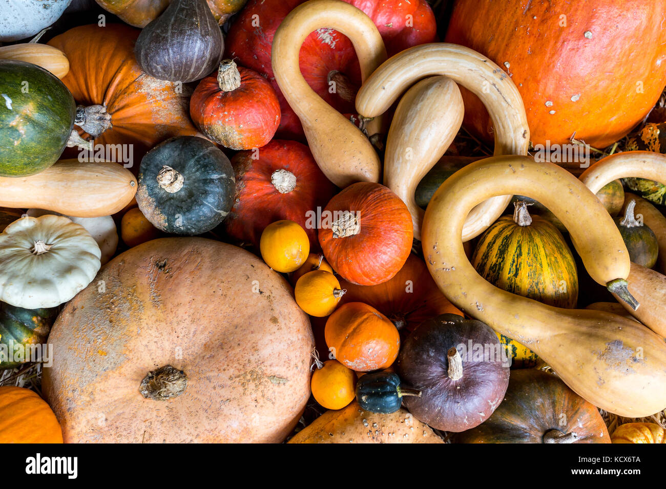 Assortment of colourful pumpkins, squashes and gourds - Stock Image