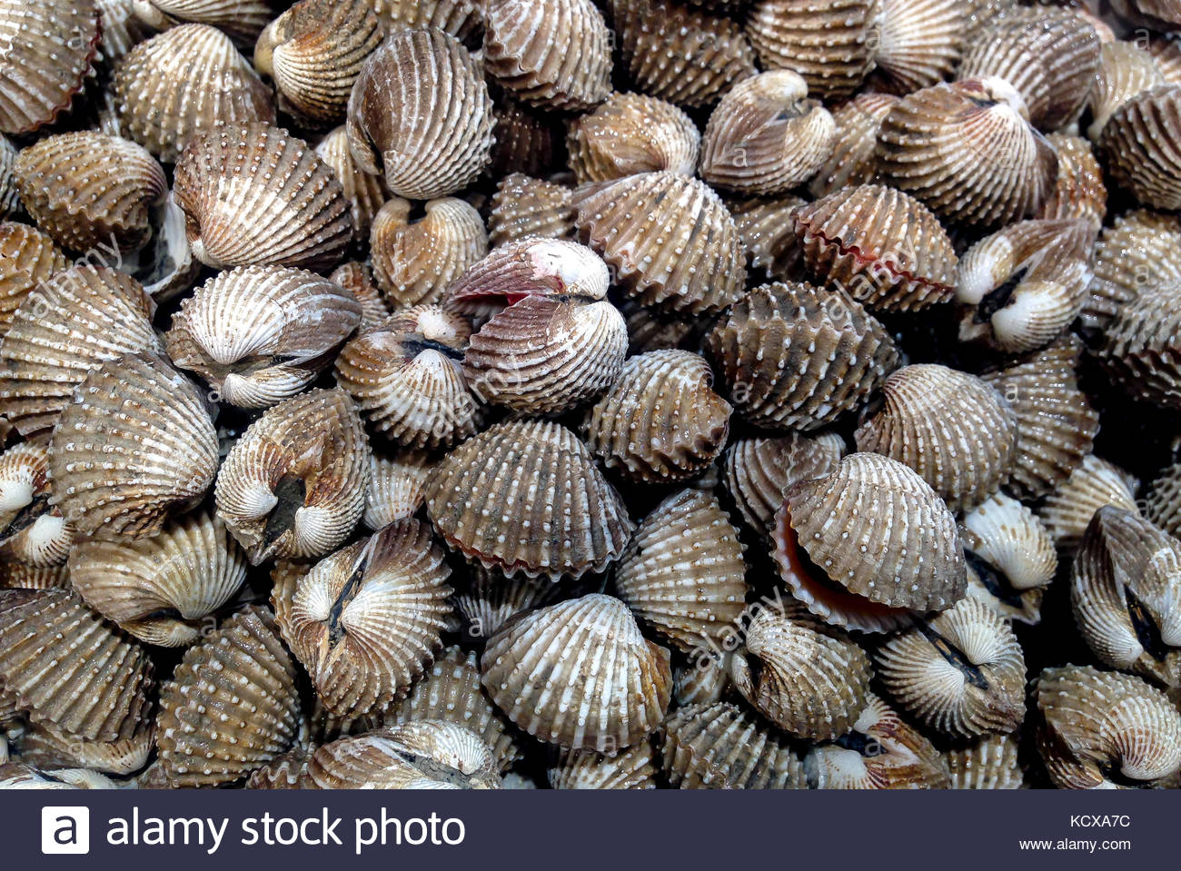 Fresh Clams on the Market - Stock Image