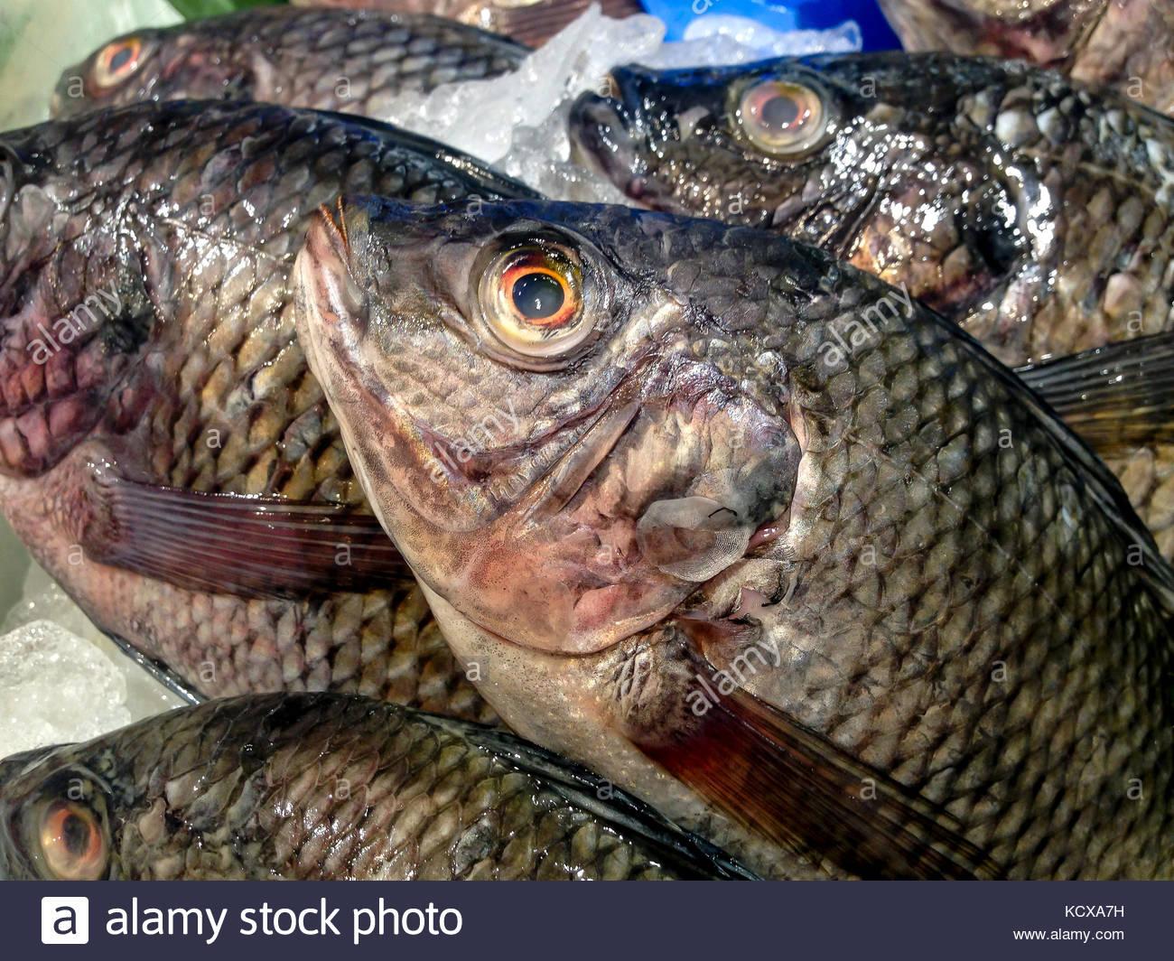 Fresh Fish on the Market - Stock Image