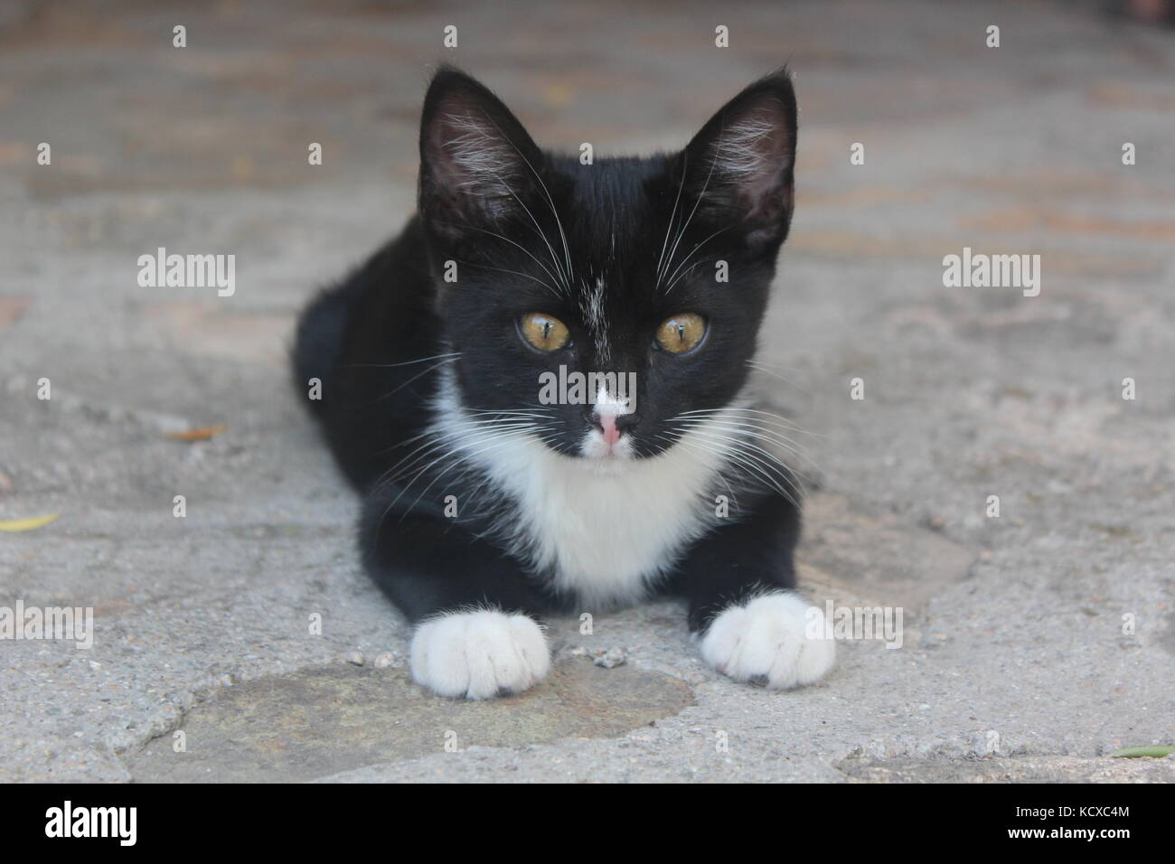 Black and white kitten with yellow eyes crouches on a stone floor. - Stock Image