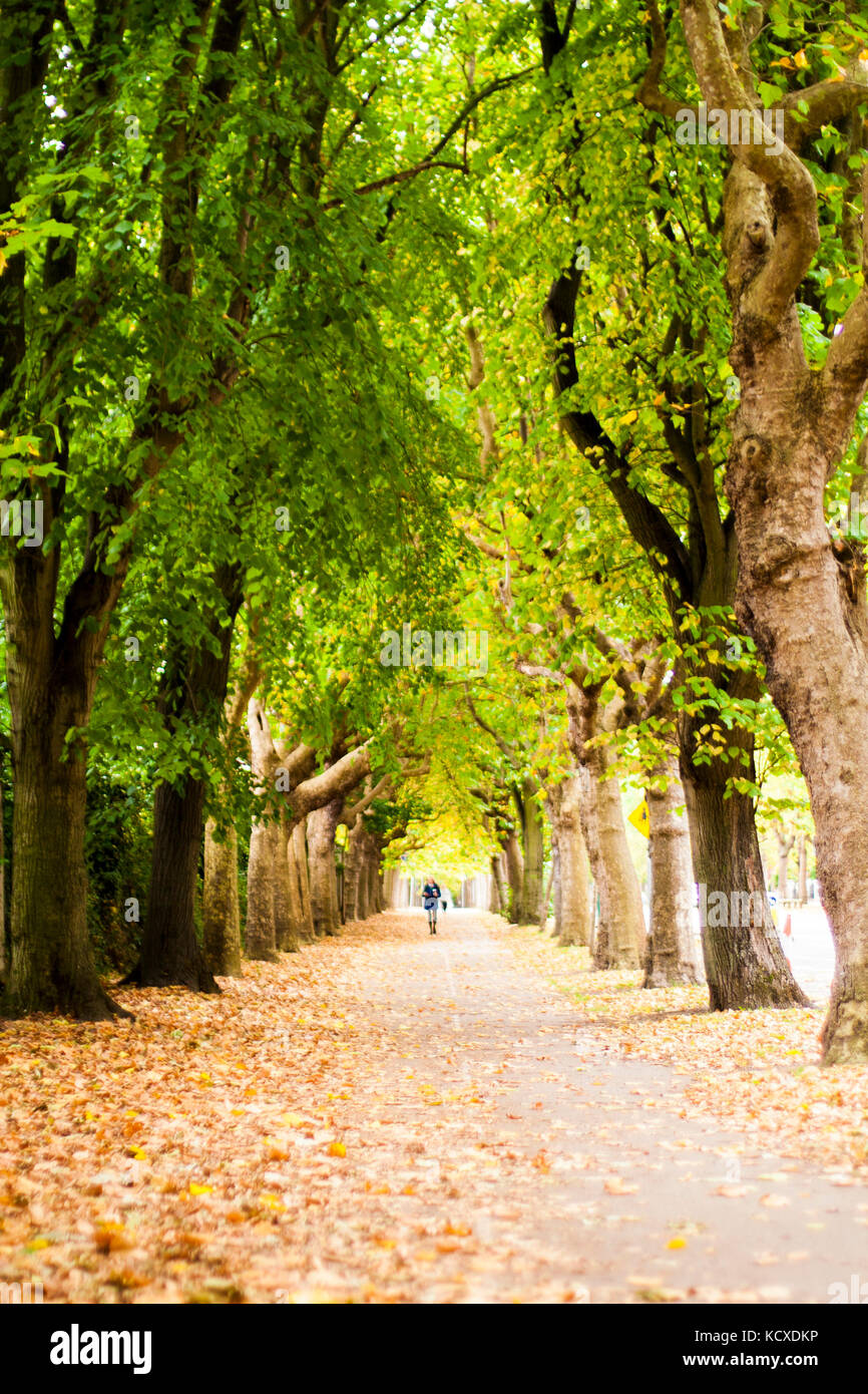 Griffith Avenue, Dublin 9, Ireland, Tree Lined street in Autumn with
