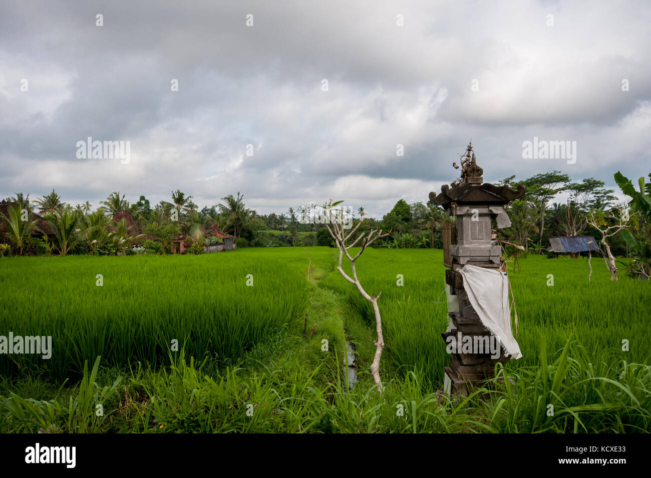 Rice field viewed from Campuan Ridge Walk. Ubud, Bali, Indonesia - Stock Image